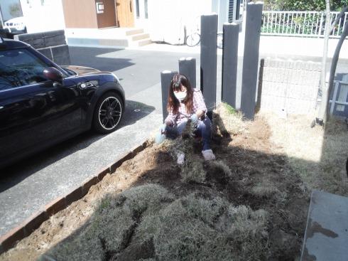 芝生の土落とし作業